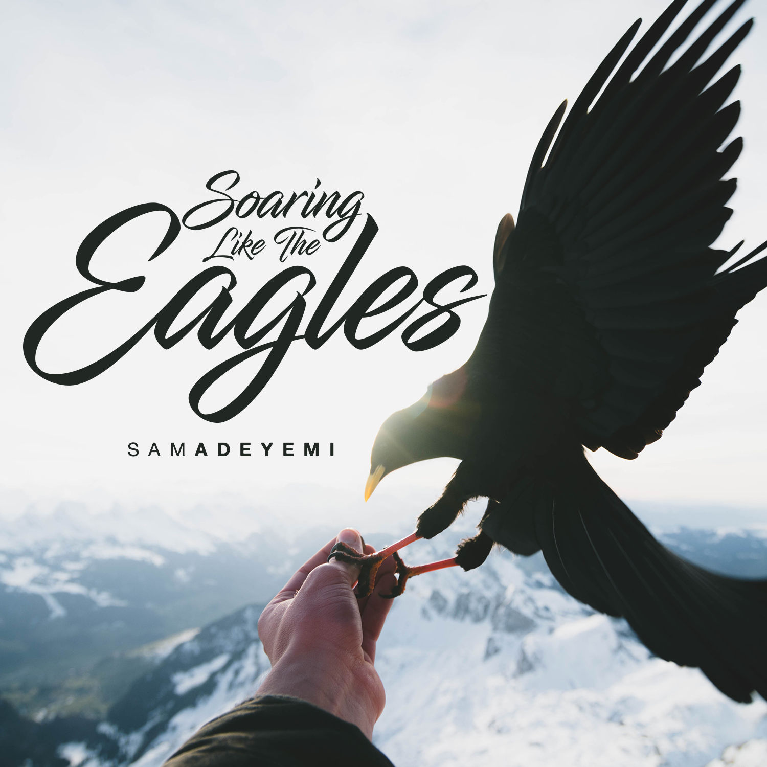 Stop Flapping, Start Soaring today –  5 ways to start soaring higher NOW